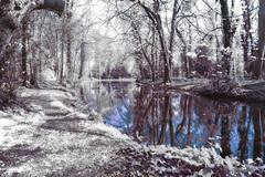 another IR variation~ in Explore (Wendy:) Tags: explored infrared ir hitech formatt filterprostopndir6 730nm spring odc bushypark