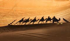 Marocco #13 (celestino2011) Tags: dune ombre marocco deserto
