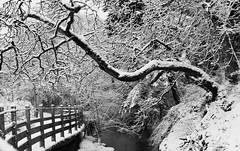 Winter scene - Colquitz River - Saanich BC (PhotonArchive) Tags: winter snow river forest landscape canon 6d