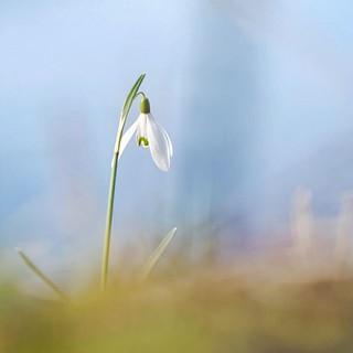 #voorjaar #voorjaar2019 #spring ~ .. .. #flowers #flowersdaily #flower_daily #flower_igers #flowerpower #flowermagic #flowerphotography #flowersofinstagram ##top_favourite_flowers #flowerporn #natureaddict