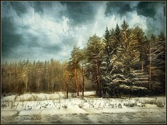 Winter landscape. (odinvadim) Tags: frost mytravelgram iphoneart textured iphoneography iphoneonly forest evening painterlymobileart snapseed specialist textures icolorama winter travel iphonex editmaster edit landscape