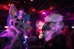 8M5A4366-21 (loboloc0) Tags: furries frolicparty frolic party furry club dance suit suiter fur fursuit dj sf san francisco indoor people costume performer animal blur portrait