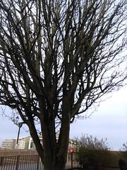 Cardiff (menchuela) Tags: cardiff march city menchuela