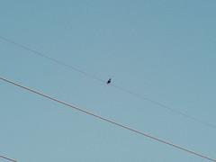 P1022500 (Claussm) Tags: jupiter 21m russian soviet vsco arizona az gh5 lumix sky telephoto vintage lens powerline