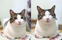 smiley Sam (Steve only) Tags: olympus pen ep5 mzuiko digital 17mm 118 f18 1718 cats sam