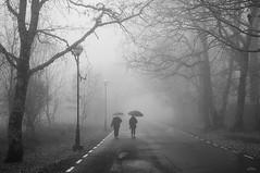 Niebla y lluvia (vitometodio) Tags: niebla fog lluvia rain raining piornal valledeljerte extremadura caceres callejeando streetphoto streetphotography bnw bnwlife bnwworld streetbw streetshots street fotodecalle topbnw streetphotobw calle blancoynegro streetart blackandwhite bnwphoto blackandwhitephotography vitometodio nikond90 nikon35mm18