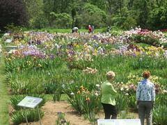 Laking Garden 2 (D. S. Hałas) Tags: halas hałas canada ontario haltonregion wentworthcounty burlington aldershot royalbotanicalgardens botanicalgarden lakinggarden irises iris