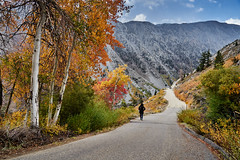 An early morning walk (AgarwalArun) Tags: sony a7m2 sonyilce7m2 landscape scenic nature views easternsierra bishopca bishopcreek leaves autumn fallfoliage mountains inyonationalforest