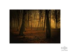 Copper carpet (silver/halide) Tags: autumn woods forest johnbaker nikkor50mm18g niftyfifty scorrier scorrierwoods cold sunlight mists winter
