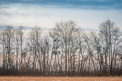 2019-01-26_08 (vond.one) Tags: vond g80 g85 panasonic lumix 1260 természet nature tél winter
