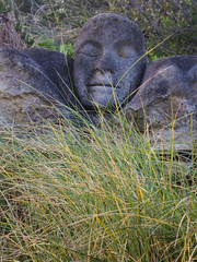 That Hay Fever Tickle (Steve Taylor (Photography)) Tags: hayfever tickle sneeze head face art sculpture carving bust stone rock man newzealand nz southisland canterbury christchurch grass autumn bonsuter sculpturepark southnewbrighton