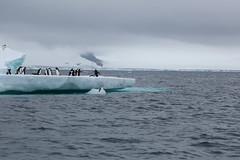 IMG_3465 (y.awanohara) Tags: adelie adeliepenguins penguins antarctica antarcticpeninsula wildlife january2019 icebergs ice icefloes