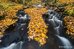 Autumn Stream 2 (burntpixel.ca) Tags: canada ontario ottawa photo photograph rural fine art patrick mcneill burntpixel beautiful amazing landscape sony a7r2 a7rii sonya7r2 wander orange autumn leaves fall waterfall rapids forest peaceful silent silentlake provincial park