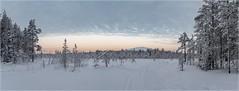 Ylläs-Finnland_92438P (uwe_cani) Tags: panasonic g9 finnland finland skandinavien scandinavia lappland lapland ylläs winter schnee snow natur nature outdoor landschaft landscape wolken clouds bäume trees himmel sky