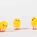 Set of cute small chickens on white background thumbnail