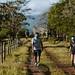 A Couple Walking along a Trail