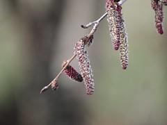Nature Bokeh - 1. März 2019 - Tarbek - Schleswig-Holstein - Deutschland (torstenbehrens) Tags: nature bokeh 1 märz 2019 tarbek schleswigholstein deutschland