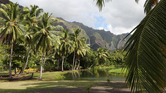 20190125_012_nuku_hiva_hakaui_valley_to_vaipo_falls_1920_1080 (lindy_scuba) Tags: beaches coconut frenchpolynesia hakatea marquesas nukuhiva