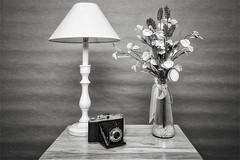 Light, Camera, Subject (Best Snaps) Tags: camera flower flowers light lighting studio table backdrop props love sexy sepia tint stilllife tabletop