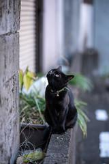 猫 (fumi*23) Tags: ilce7rm3 sony street sel85f18 85mm fe85mmf18 a7r3 animal alley katze gato cat chat neko bokeh dof ねこ 猫 ソニー 路地 emount