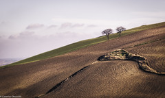 Lontananza (SDB79) Tags: alberi terra colline molise ururi paesaggio campagna