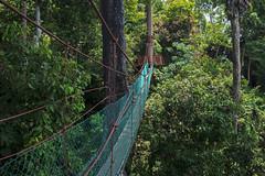 Canopy Walk, Bukit Gemok, Tawau, Sabah. (Andy @ Pang Ket Vui ( shootx2 )) Tags: wclx100ii fujifilm x100f landscape canopy walk tawau sabah borneo walkway nature best morning peace