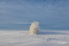 Brrr (Joe Chowaniec Images) Tags: winter flickrsbest flicker frost snow cold landscape landscapes nature canada prairies weather brrrr clouds frostedtrees trees canon