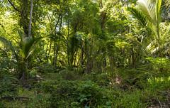 Jungle / Джунгли (dmilokt) Tags: природа nature пейзаж landscape лес forest dmilokt nikon d850