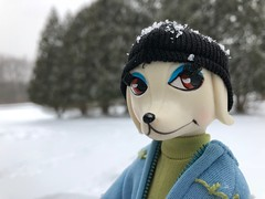 Peteena - Skiing Poodle (Foxy Belle) Tags: peteena doll dog snow ski outside poodle bikini 1966 vintage