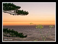 coucher de soleil entre San Francisco et los Angeles (hcortade) Tags: etatsunis usa voyage travel ocean ouest orange océan paysage eau salée salted bleu blue soleil coucher cousherdesoleil sunst monde wolrld photos picture coth5 outside dehors nature