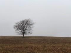 (tommyr68) Tags: oklahoma iphonography iphone winter tree rain fog fogography