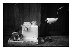 Cat and crane (gol-G) Tags: fujifilm xpro2 fujifilmxpro2 fujinon xf 23mm f14 xf23mmf14r digital bw japan cat