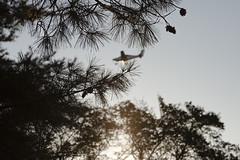 A SMALL AIRPORT, SOME PARKS AND CLOUDS - CLXXIX (Jussi Salmiakkinen (JUNJI SUDA)) Tags: tokyo japan cityscape landscape 武蔵野 多摩 東京 日本 風景 sky 2018 october lokakuu autumn chofu 調布 park nogawapark 野川公園