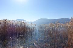Reed @ Lake Annecy @ Petit Port @ Annecy-le-Vieux (*_*) Tags: sunny february afternoon winter hiver 2019 europe france hautesavoie 74 annecy annecylevieux savoie lacdannecy lakeannecy petitport lac lake reed roseau