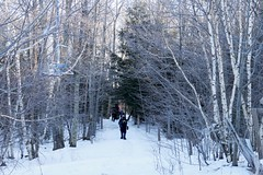 Into the Woods 1902170307w (gparet) Tags: hike hiking trail trails woods forest nature outdoor outdoors scenic vista naturephotography catskills catskillmountains kaaterskill highpeak snow ice