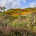 Wild California Poppy fields in Walker Canyon in Lake Elsinore