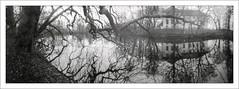6x17 analog pinhole (Dierk Topp) Tags: 6x17 bw bäume realitysosubtle6×17 analog architecture lake monochrom pano panorama pinhole sw trees water wood rolleisuperpan200