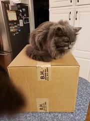 Wanda and Cosmo Enjoying My New Camera (cseeman) Tags: box cats pets saline michigan bh bhbox cardboard boxes cardboardboxes catsonboxes camera cameraequipment