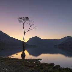 The Dawn Sentinal. (miketonge) Tags: cumbria lakedistrictnationalpark d850 dawn sunrise miketonge mountains lake 1424 nisi nikon miketongephotographycouk lakedistrict haystacks fleetwithpike tree buttermere