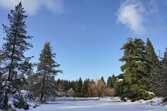 VanDusen Botanical Garden 溫哥華植物園 (syue2k) Tags: british columbia 不列顛哥倫比亞省 canada vancouver 温哥華 vandusen botanical garden 溫哥華植物園