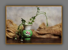 Bud vase with weeds (DayBreak.Images) Tags: tabletop stilllife bud vase weeds flowers cheese cloth canondslr meike 85mmf28 macro lightroom preset photoscape texture frame