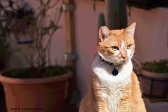La jefa (Juan R. Lascorz) Tags: haustier haustiere mascotas mascota pet pets animaldecompagnie animauxdecompagnie
