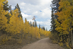 Autumn 2018 Colorado (Only by Jeanne Photography) Tags: autumn 2018 colorado fall season aspens mountains beautiful onlybyjeannephotography landscape canon photographer denver