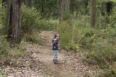 follow me! (louisa_catlover) Tags: karwarra karwarraaustraliannativebotanicgarden garden outdoor nature kalorama dandenongs melbourne victoria australia autumn portrait child family toddler daughter tabitha tabby