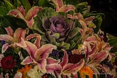 2018. Hong Kong. (Marisa y Angel) Tags: 2018 hongkong china flores blüte chine cina fiori fleurs flowers prc peoplesrepublicofchina volksrepublikchina xiānggǎng zhōngguó