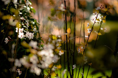 Spring...ing (tonguedevil) Tags: outdoor outside countryside spring nature flowers blossom trees leaves colour light sunlight shadows bokeh
