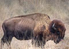 2019 - Vacation - Wichita Mountains Wildlife Refuge (zendt66) Tags: zendt66 zendt nikon d7200 wichitamountains wildlife refuge lawton oklahoma granite mountains