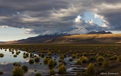 Payachatas (Alfredo Santamaria) Tags: bolivia