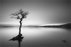 Lone Tree - Loch Lomond (Phil Durkin CPAGB BPE3) Tags: 2019 canon5dmk4 phildurkin scotland uk winter landscape outdoors