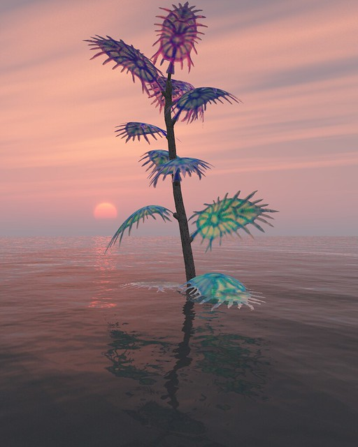 weird plant sunset